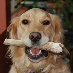dog-dear-horns1