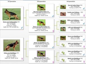 ab141e92b9e3 Argus Dog Trainer - Εκπαίδευση σκύλων κατ  οίκον σε όλη την Αττική ...