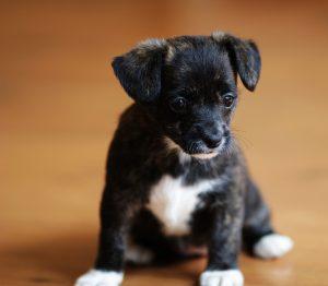 Προσοχή: ο σκύλος σας καταλαβαίνει τι λέτε
