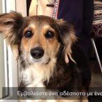 Υποστηρίξτε την Εθελοντική Δράση Κτηνιάτρων Ελλάδος