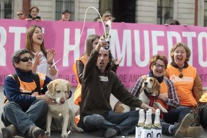 madrid-euthanasia-strays