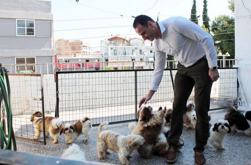 Peristeri-dogs