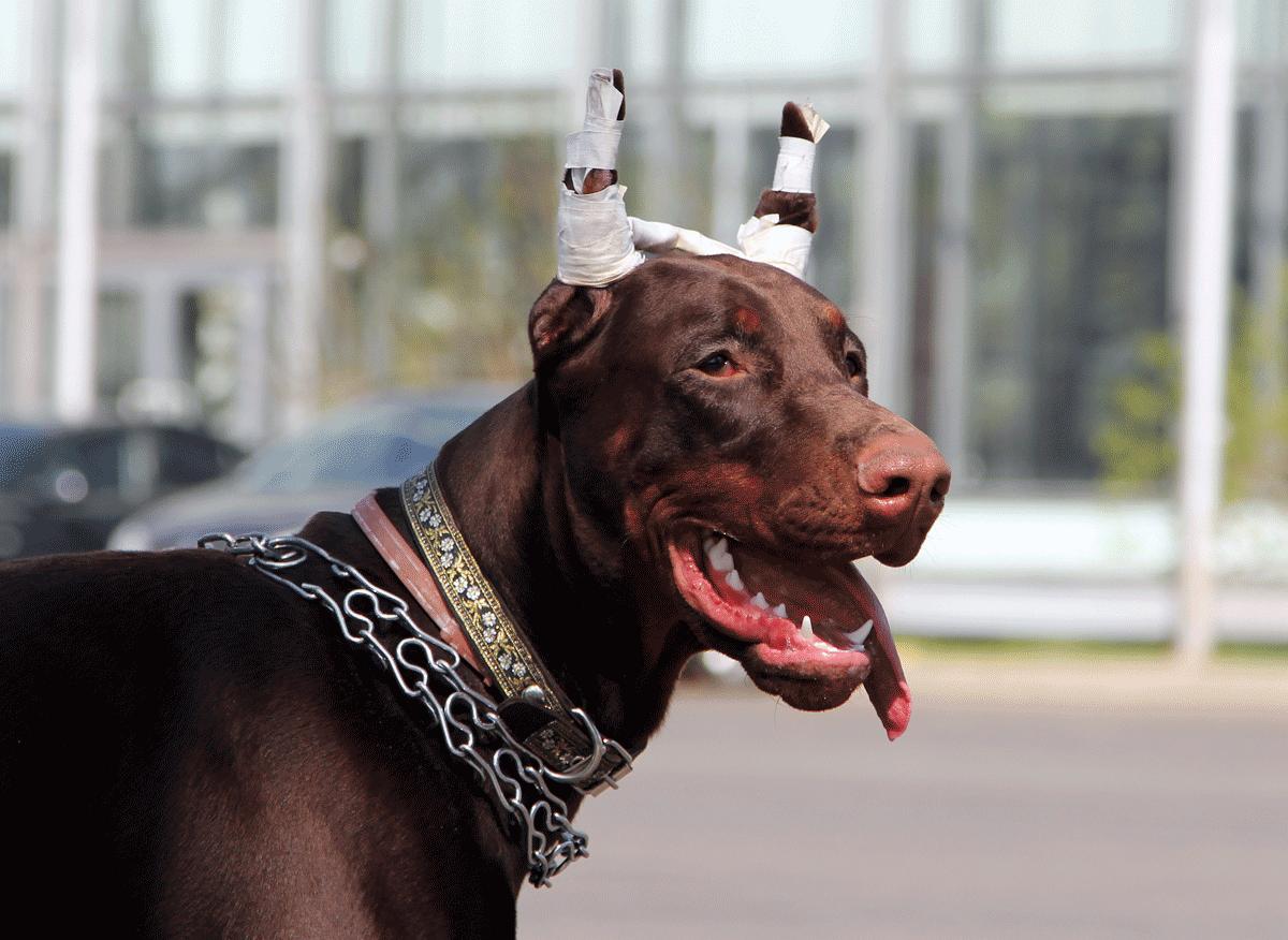 f4e5f7bed173 Argus Dog Trainer - Εκπαίδευση σκύλων κατ  οίκον σε όλη την Αττική ...