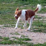 Ο πιο ασφαλής χώρος για σκύλους στο Δήμο Περιστερίου