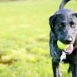 Δήμος Ιλίου: Δημιουργεί πάρκα αναψυχής για σκύλους