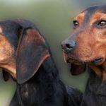 Αυτές είναι οι 6 ελληνικές ράτσες σκύλων