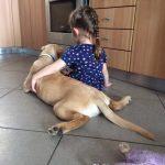 Kompi - Labrador