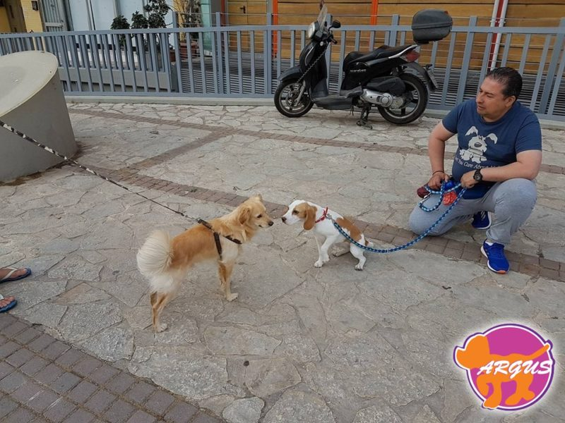 Moka-Beagle