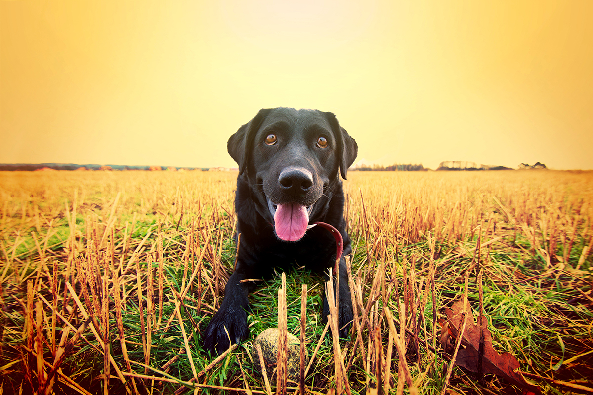 Ίσως Είναι πιο Εύκολο να Πενθείς για τον Θάνατο Ενός Ανθρώπου, Παρά Ενός Σκύλου