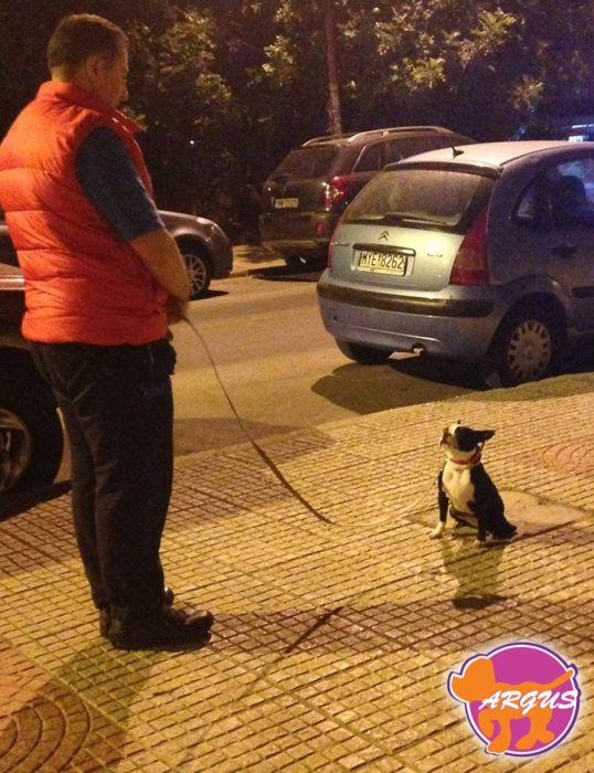 Λόρα - Boston Terrier - Νέα Σμύρνη
