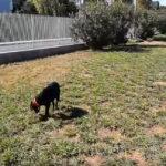 Πάρκο σκύλων Αττικής οδού