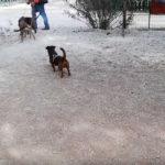 Πάρκο σκύλων Φλοίσβου