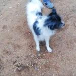 Ιρις-Πάρκο σκύλων Παπάγου