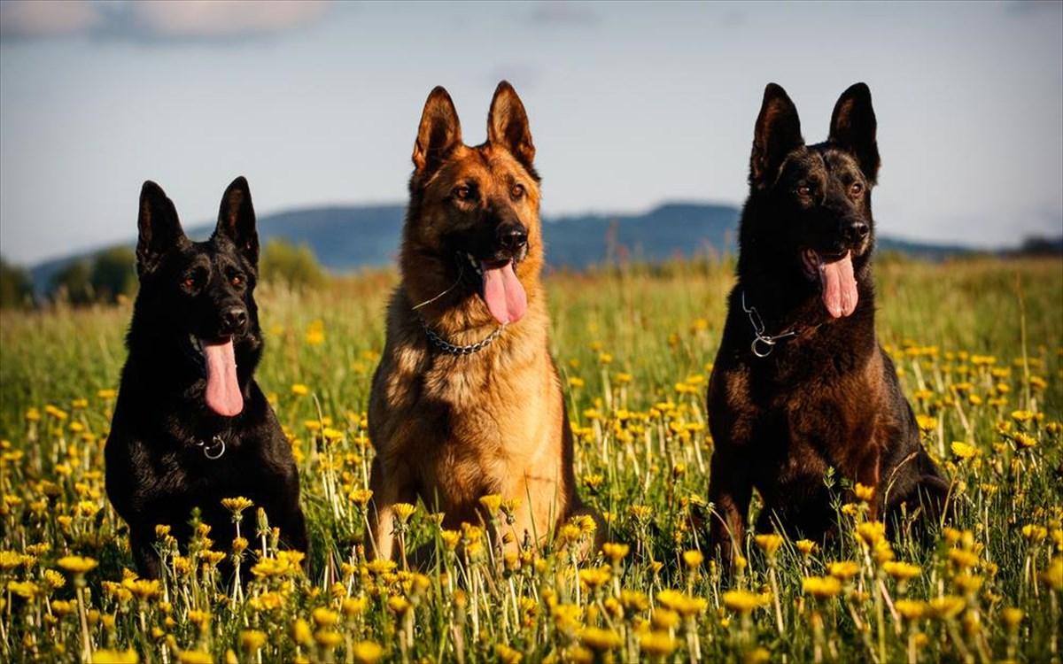 Γερμανία: Υποχρεωτική με νόμο γίνεται η βόλτα των σκύλων