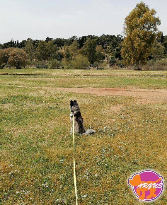 Husky - Berta
