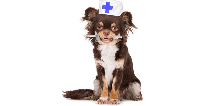 Εμβόλιο κατά της Λεϊσμανίασης (Καλαζάρ)