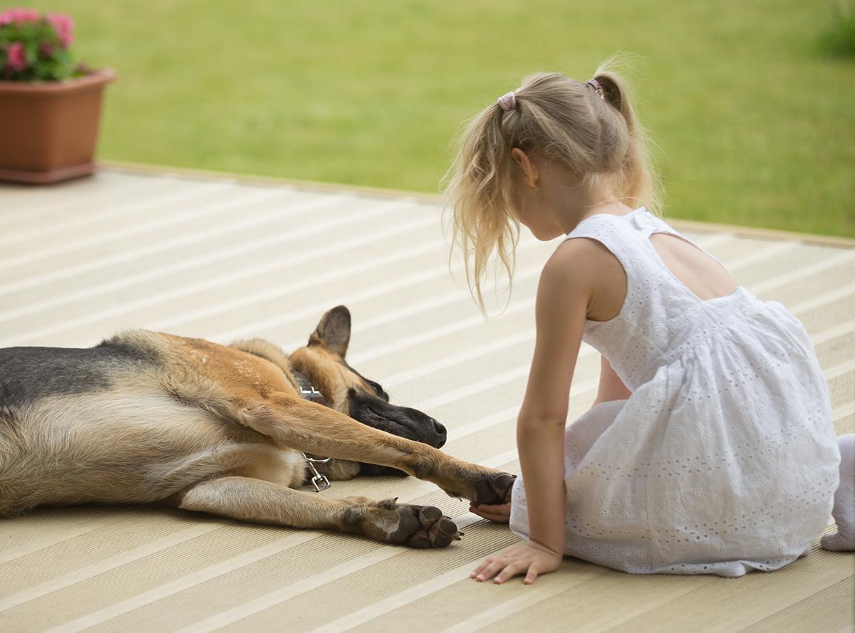 Εκπαίδευση σκύλων κατ' οίκον
