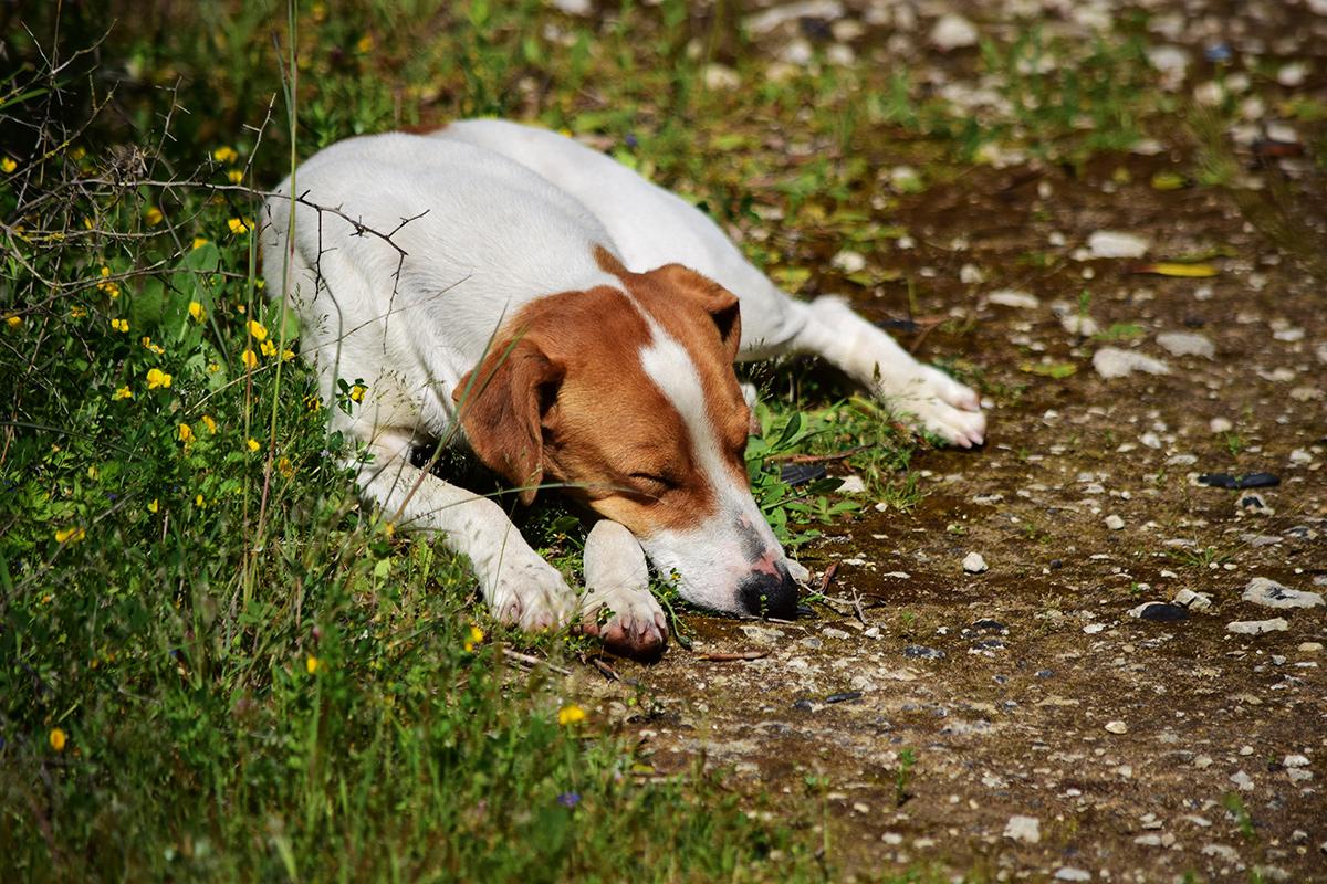 Πρόγραμμα Ευαισθητοποίησης του Δήμου Παπάγου - Χολαργού για τα Αδέσποτα και τα Δεσποζόμενα Ζώα