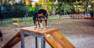 Πάρκα σκύλων στον Κορυδαλλό