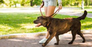 Πρόστιμο σε όποιον βγάζει βόλτα τον σκύλο του χωρίς λουρί