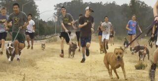 Μαθητές πήραν βόλτα σκυλιά που ήταν κλεισμένα σε καταφύγιο και αυτά ξετρελάθηκαν