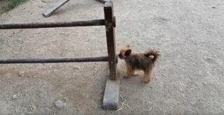 Πάρκο Σκύλων Αγίου Δημητρίου